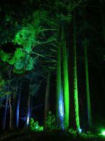 Forêts et bois sur Google Earth