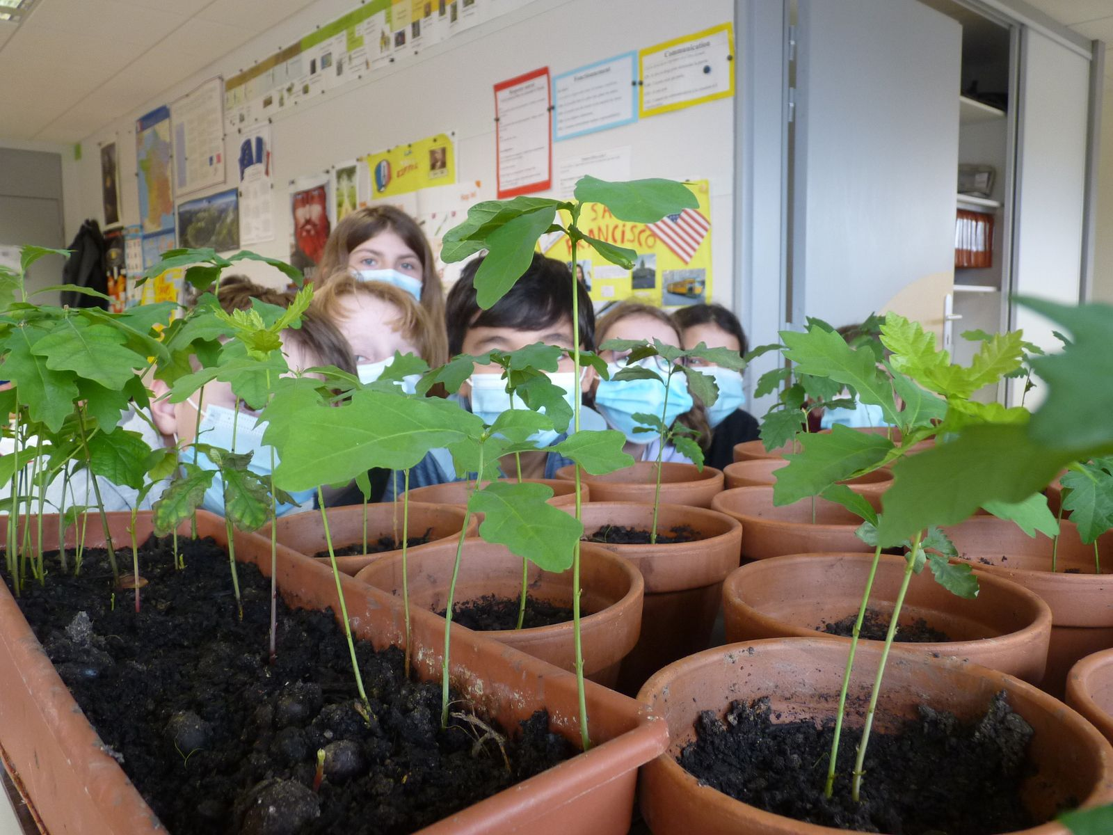 Les élèves qui plantaient des chênes