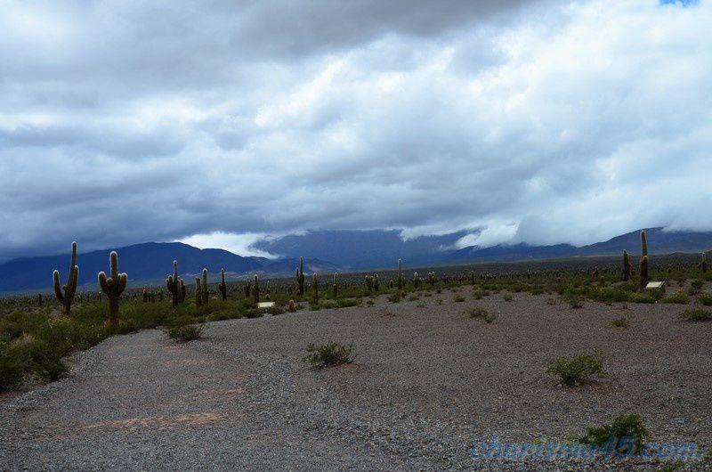 Parque nacional Los Cardones, Argentine en camping-car