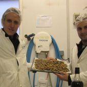 Insectes comestibles : un marché en pleine croissance