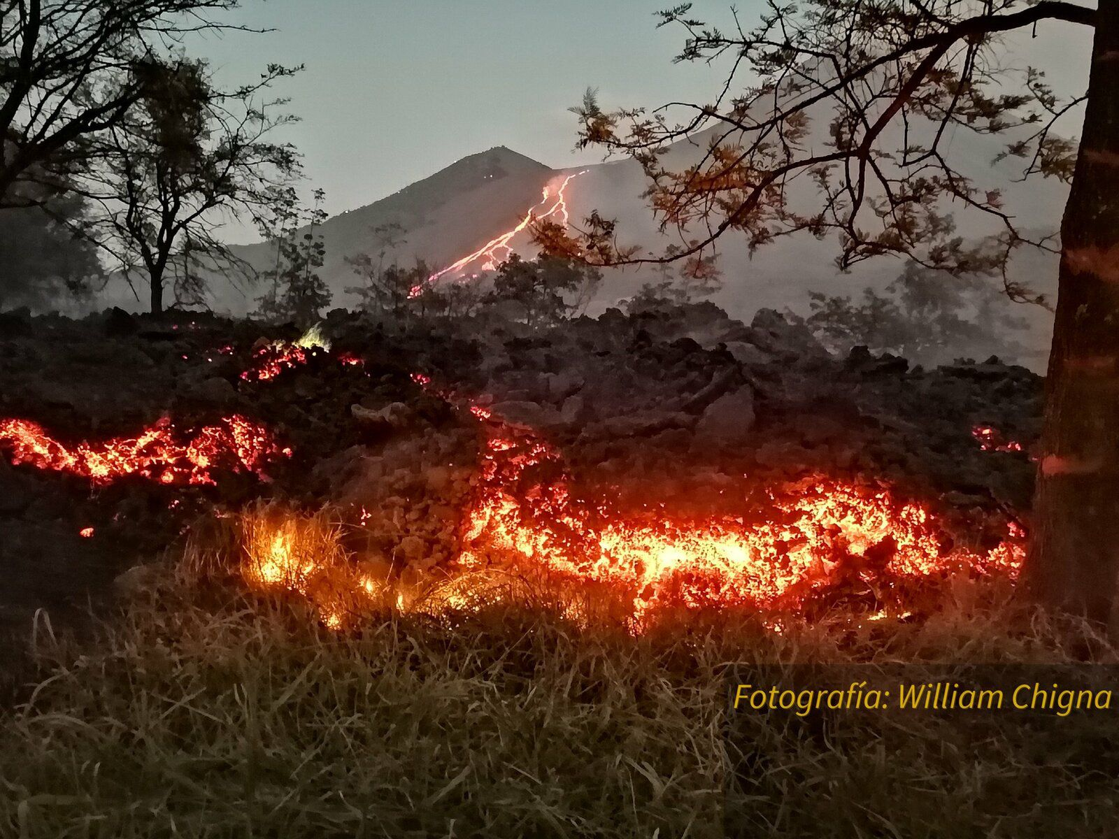 Pacaya - 03.30.2021- the lava flow burns everything in its path - photo William Chigna