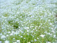 Hokkaido : Biei : Patchworks agricoles et champs de fleurs