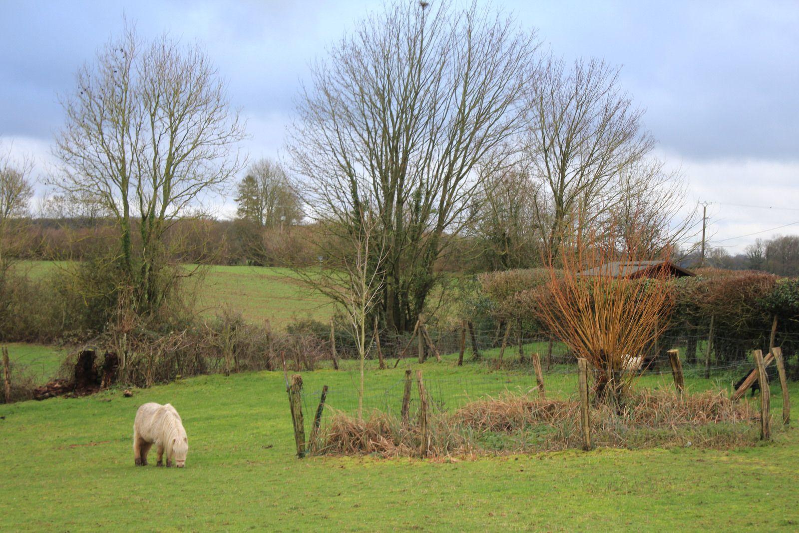 Décembre  le jardin se repose les jardiniers s'activent