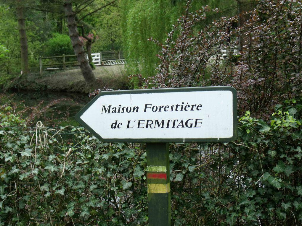 Album - Foret-de-Phalempin---le-3-mai
