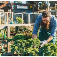 Point de vue: L'agriculture urbaine peut-elle apporter de réelles solutions à l'insécurité alimentaire?