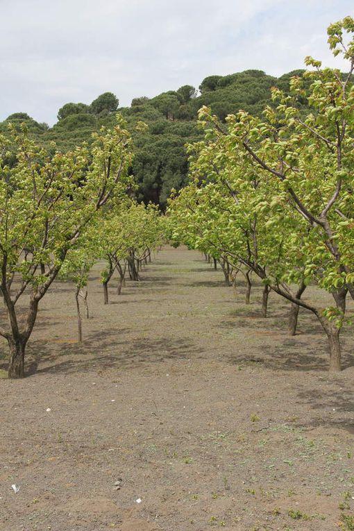 Cittadini per il parco - 19-04-20015 Visita alle aziende agricole di Trecase