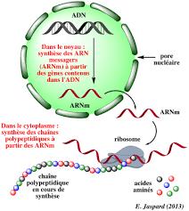 Fini les vaccins et ordis de plongée ? Fin des virus et paliers grâce à l'ARN alligator !