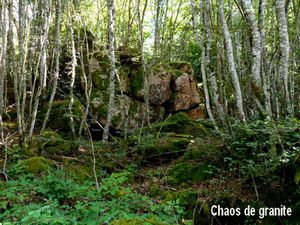 Les richesses naturelles de la  forêt de Pierre Luzière