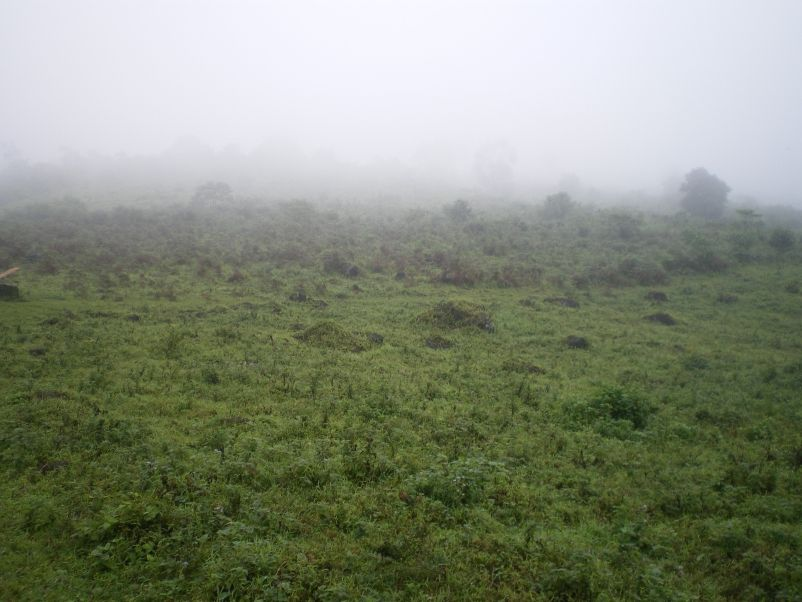 Ascension du Mt Cameroun