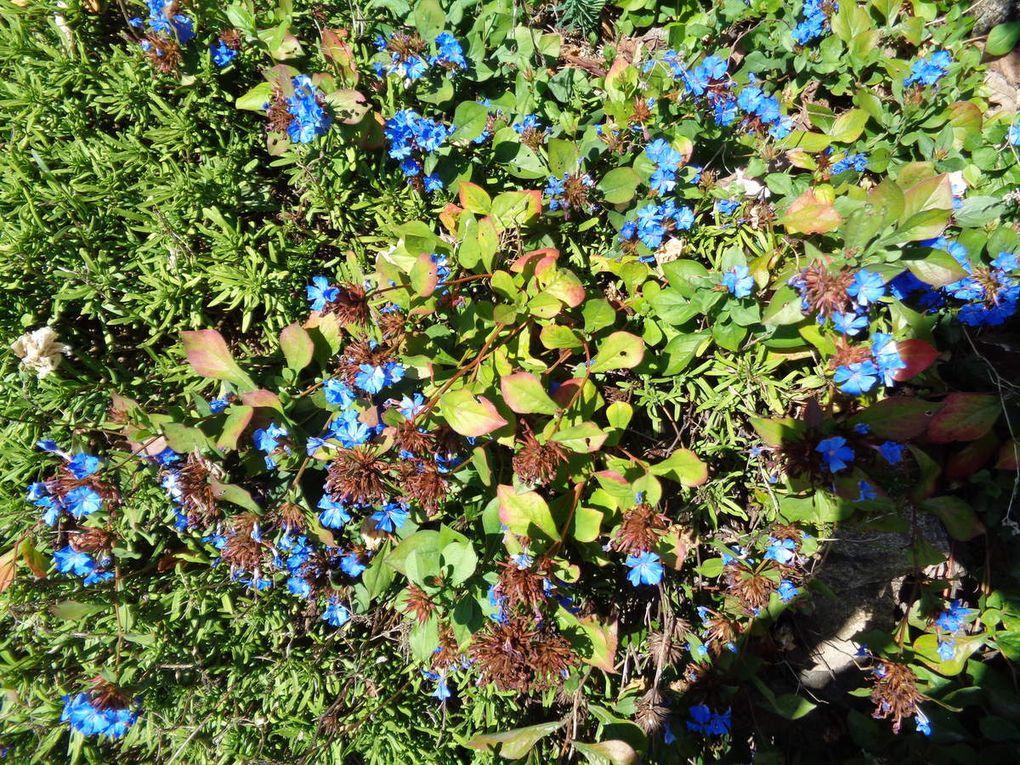 Et aussi de nombreux endroits très fleuris ......
