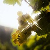 LE CEPAGE - Emmanuel Delmas, Sommelier & Consultant en vins, Paris