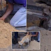 Pregnant dog saved after being trapped underground for two days