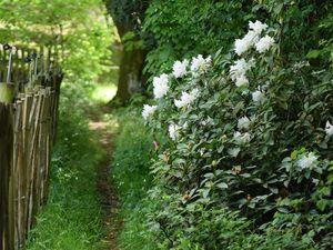Jacinthe des bois, rhododendrons, sceau de Salomon, pavot du pays de Galles.