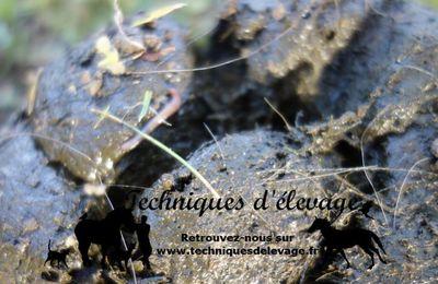 Parasites dans le crottin après vermifuge : je donne un nouveau vermifuge ?