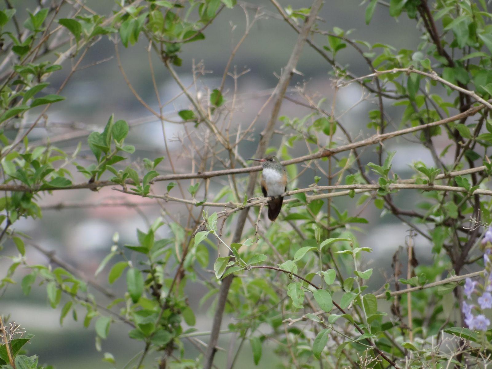 Voyage en Equateur 2014. Cuenca. Parc National Cajas. Zamora. Parc Podocarpus. Loja. Vilcabamba