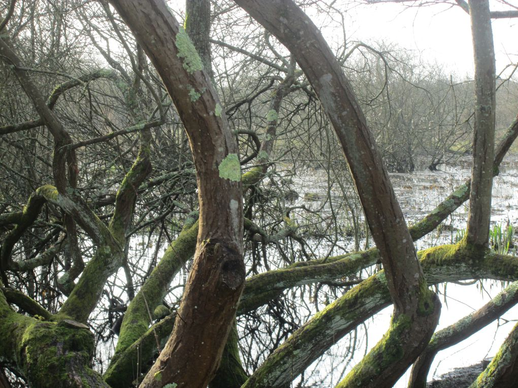 Vues prises le 23 février 2014 dans les marais de Tougas, dont l'aménagement doux fait déjà le bonheur de randonneurs et promoneurs dès les premières heures du matin. La montée croissante de la lumière dans un ciel gris au départ donne envie