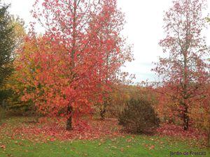 Secteur sud du Jardin de Frescati : Liquidambar stiraciflua