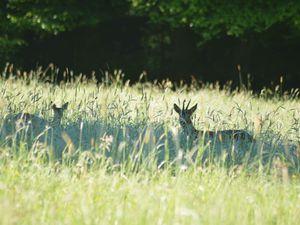 En mai la nature est tout simplement en pleine de surprises....
