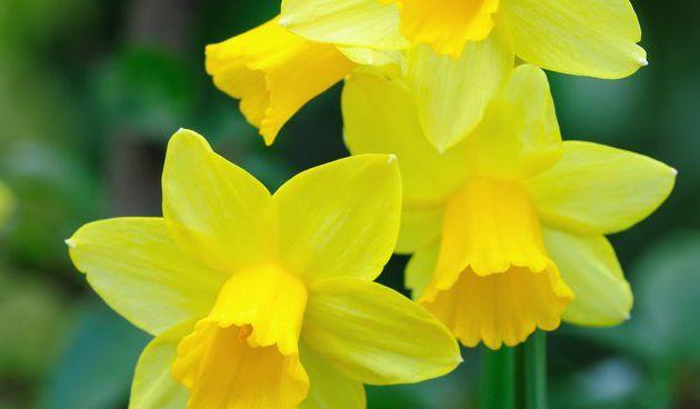 C'est le printemps au jardin de Savio !