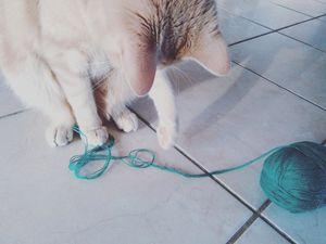 DIY : Fabriquer un pompon pour mon chat !