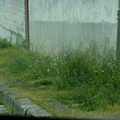 Quand l'herbe des trottoirs vierzonnais empêche le passage des poussettes... - Vierzonitude