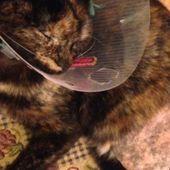 Pétition : Enquête approfondie sur la disparition de chats à Granville