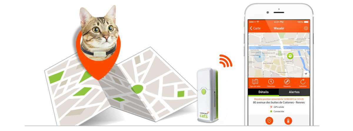 Innovation high-tech : Weenect Cats, Oh bah chat alors !