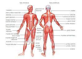 Les crampes/ «Souvent douloureuses, la plupart du temps bénignes, elles traduisent cependant toujours une anomalie»