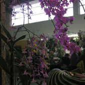 Invit Expo: Vergèze 2017 Les cannes fleuries - Orchidium-Vaunage