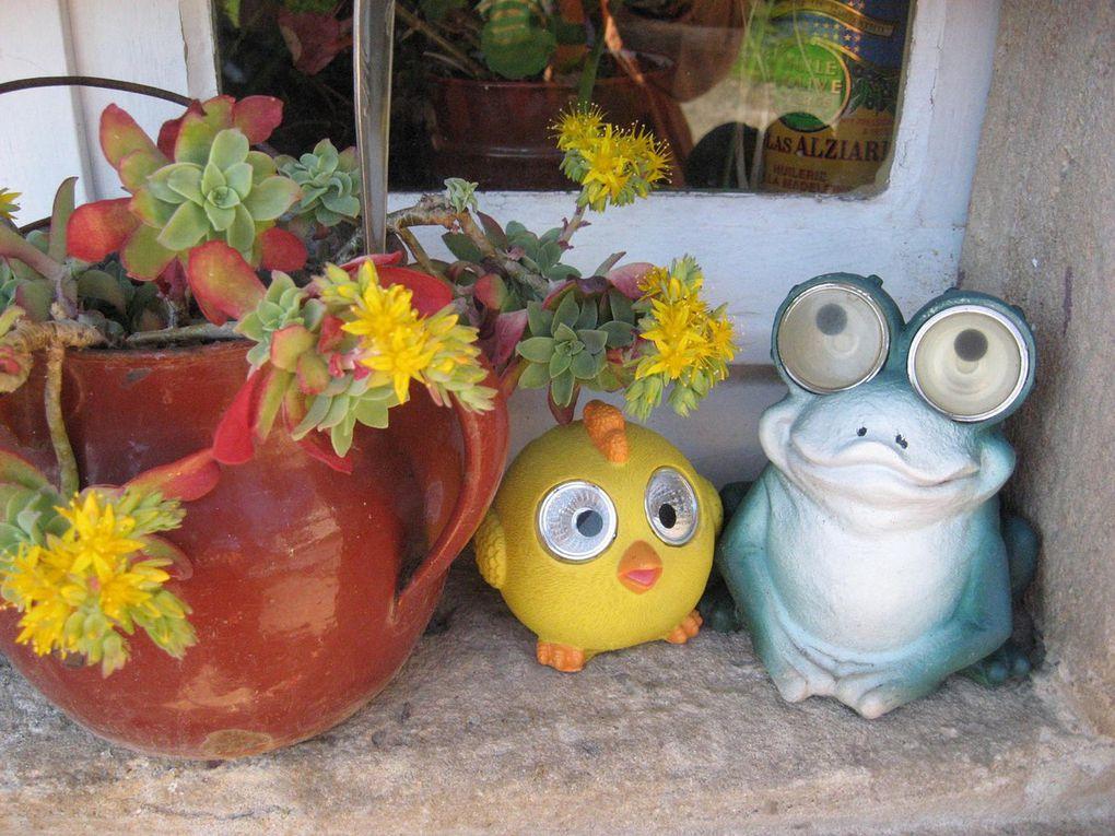 Petits pots fleuris...