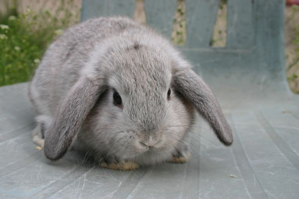Le lapin! Le lapin!
