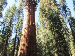 SEQUOIA NATIONAL PARK(1)