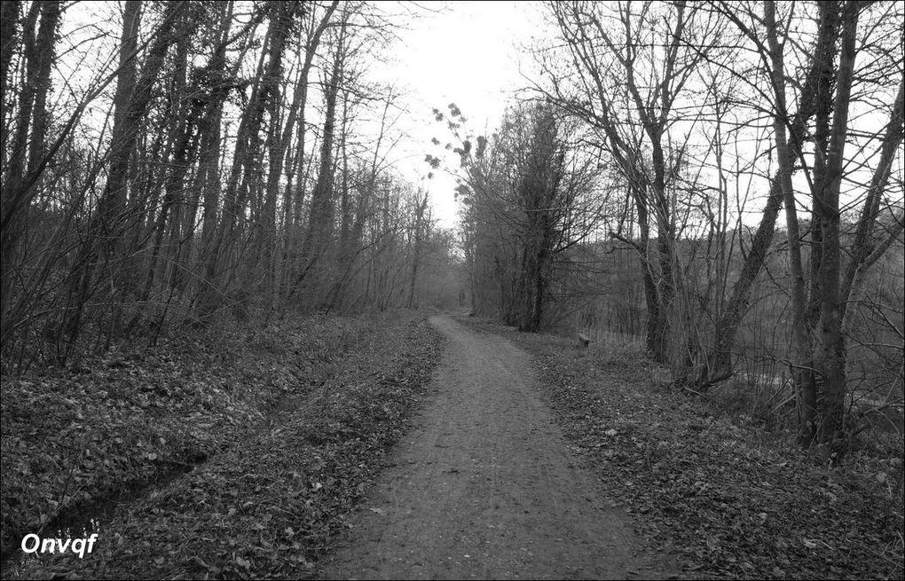 Étang de la Geneste, Buc (Yvelines 78) AA