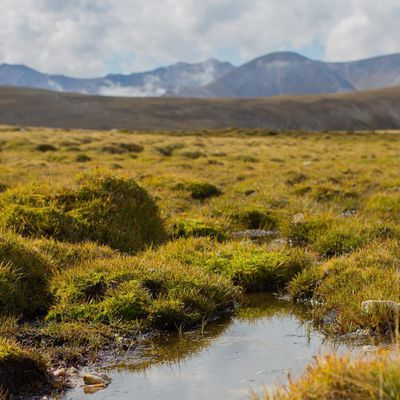 Protecting our peat bogs