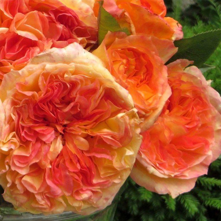 photo Promesse de fleurs