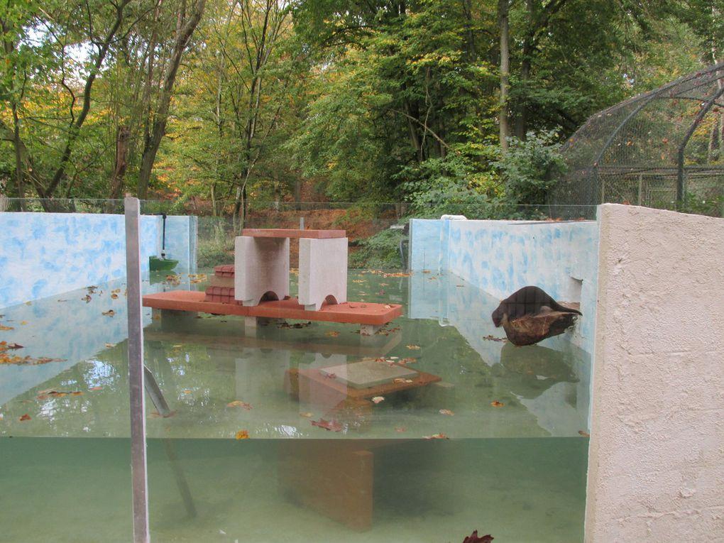 Les élèves de CPA au zoo d'Attilly