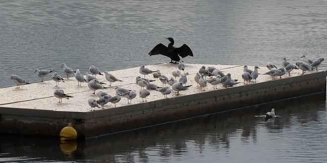 Oiseaux en blanc et noir