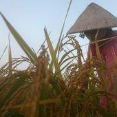 De l'agent orange étasunien au Roundup européen : Le Vietnam poursuit sa lutte ! -- Guillaume SUING
