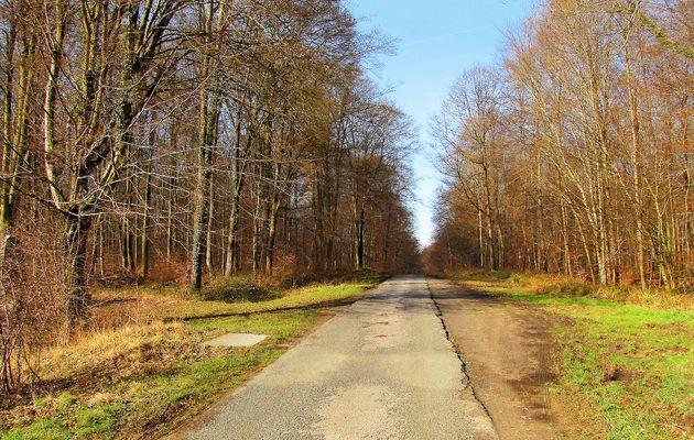 carrefour_Route du Pendu_Laie des Rossignols