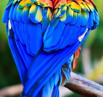 Collection des oiseaux sous fond transparent