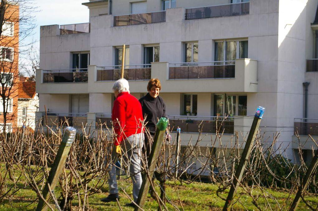 Dernier samedi de février à la vigne
