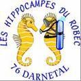 C'est la reprise ! - Hippocampes