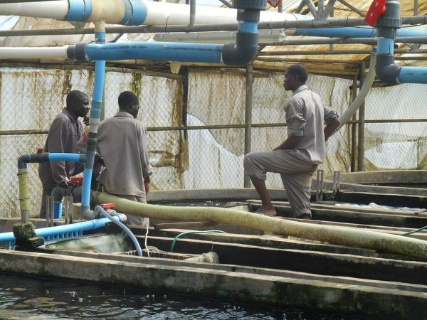 http://malawi24.com/2015/07/03/chambo-fisheries-redefining-malawis-aquaculture-industry/
