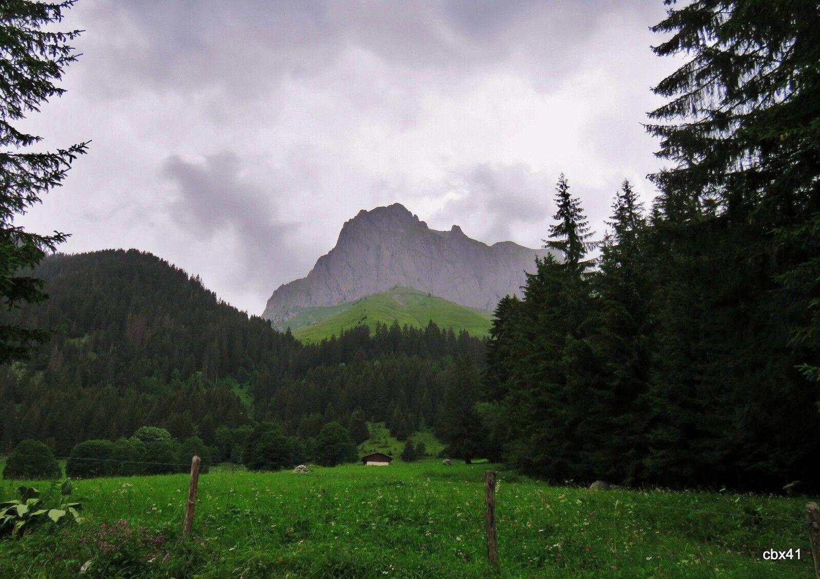Le Parc à Daims de La Chapelle d'Abondance , Haute-Savoie