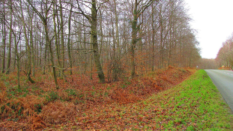 carrefour_Laie de l'Ancien Mur du Parc_D973