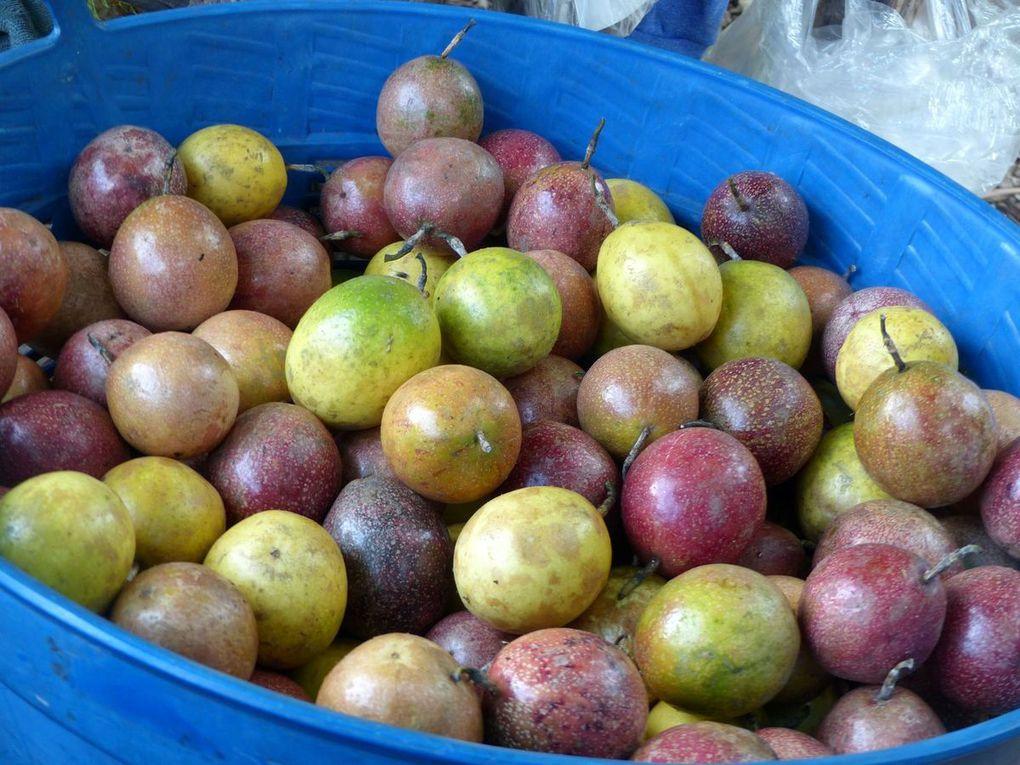 Le sawalot (2) - Fruit de saison (18-20)