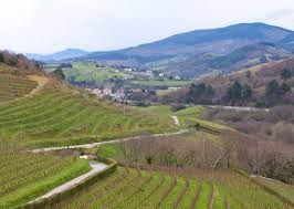 Vine and Spanish Basque Country