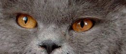 Quoi de plus beau qu'un chat ? Chats de chez moi, d'amis et d'ailleurs.