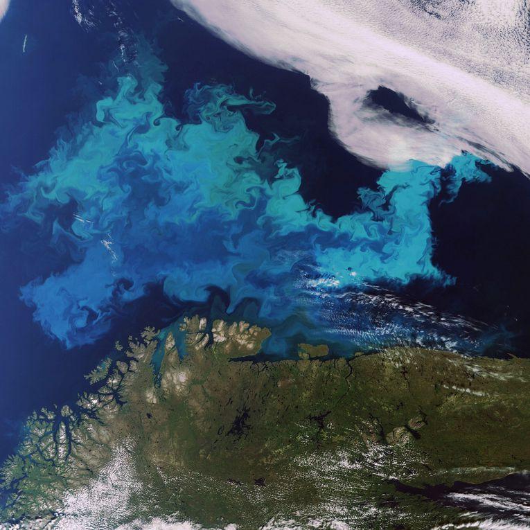 Une série d'images de satellites d'observation mettant en évidence des floraisons de phytoplancton ou des phénomènes liés à la couleur de l'eau.