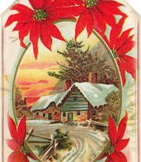 Forêt de sapins de Noël